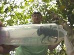 seekor-lebah-raksasa-betina-wallace-ditemukan-di-maluku-utara.jpg