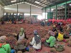 sejumlah-petani-di-brebes-jawa-tengah-saat-ini-sedang-menggelar-panen-bawang-merah.jpg