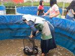 Sukses Panen Bantuan Budidaya Ikan Bioflok, KKP Optimistis Kesejahteraan Pembudidaya Meningkat