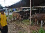 selama-ini-kabupaten-berau-peternak-sapi_20180211_160633.jpg
