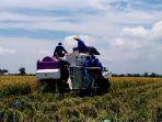 senangnya-petani-panen-padi-organik-di-demak-biaya-murah-hasil-meriah_20170224_161611.jpg