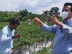 Senator Kepri Dorong Usaha Budidaya Cabai di Batam