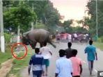 seorang-pria-tewas-diserang-gajah-fgfgfg.jpg