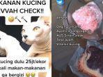 VIRAL Video Kucing Diberi Makan Daging Sirloin Harga Jutaan Rupiah, Ini Alasan dan Cerita Lengkapnya