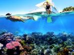 snorkeling_20150203_142704.jpg