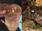 spesies-langka-yang-ditemukan-di-bolivia_20150825_143200.jpg