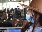 spg-cantik-layani-pembeli-hewan-kurban-di-kandang-sapi-widistia_20200724_121414.jpg