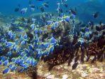 spot-diving-di-pulau-weh.jpg
