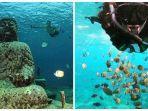 spot-snorkeling-terbaik-di-nusa-penida.jpg