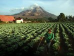 status-awas-gunung-sinabung_20150610_144318.jpg
