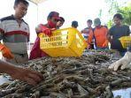 tambak-milenial-atau-millenial-shrimp-farming.jpg