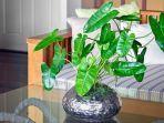tanaman-dalam-ruanga.jpg