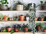 10 Tanaman Hias yang Bikin Rumah Anda Bebas Debu dan Polusi Udara