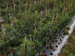 tanaman-pertanian.jpg