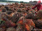 tandan-buah-kelapa-sawit_20180523_151956.jpg