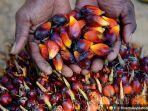 Aprobi: PMK 191/2020 Perkuat Kelanjutan Program Biodiesel