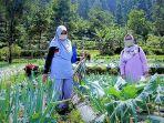 Tegal Tawarkan Wisata Petik Sayur Langsung dari Petani