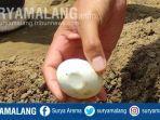 Temuan 27 Butir Telur di Bantaran Bengawan Solo, BKSD Pastikan Itu Bukan Telur Buaya