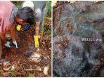 tengkorak-manusia-yang-ditemukan-di-kecamatan-cambai-prabumulih.jpg