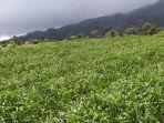 terkait-impor-hortikultura-kementan-tegaskan-hanya-beri-rekomendasi-teknis.jpg