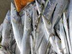 terkontaminasi-covid-19-produk-ikan-beku-asal-indonesia-dilarang-masuk-ke-china.jpg