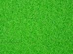 tes-buta-warna-hijau.jpg