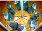 tes-kepribadian-berapa-kucing-yang-kamu-lihat-jawabannya-bisa-tentukan-seperti-apa-karaktermu.jpg