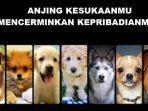 tes-kepribadian-berdasarkan-jenis-anjing.jpg