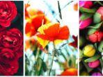 Tes Kepribadian: Bunga Mana yang Kamu Pilih? Hasilnya Ungkap Dirimu Setia, Baik Hati atau Berani