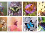 Tes Kepribadian - Kupu-kupu Mana yang Kamu Sukai? Pilihanmu Ungkap Sifat Aslimu yang Tak Disadari