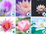 tes-kepribadian-pilih-satu-bunga-lotus-ini-dan-lihat-situasi-yang-baru-kamu-hadapi.jpg