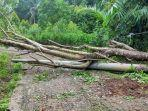 tiang-listrik-patah-terkena-pohon-tumbang.jpg