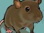 tikus-GAMBAR.jpg