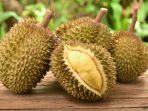 Cara dan Tips Memilih Durian yang Matang dan Manis: Mulai dari Bentuk, Tangkai hingga Aromanya