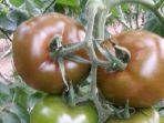 tomat-samuel-etoo_20170620_161727.jpg