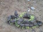 ular-boa_20170331_195452.jpg
