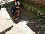 ular-piton-yang-memangsa-unggas-ditangkap-oleh-warga-di-desa-senden.jpg