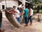 ular-piton_20171003_143933.jpg