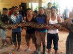ular-sanca-atau-ular-sabak_20150519_114829.jpg