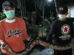 Asyik Nongkrong, Warga di Situ Pamulang Kaget Ada Ular Sanca Batik Melintas