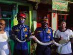 ular-sanca-di-matraman-kebon-manggis-ni.jpg