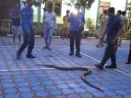 ular-sanca_20180124_163153.jpg