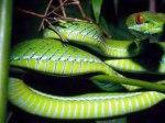 ular.jpg