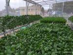 urban-farming1234.jpg