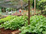urban-farming_20180202_133722.jpg