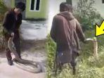 video-detik-detik-king-kobra-ditangkap-kurir-jne-di-perumahan-warga-mengaku-lihat-ada-6-ekor-ular_20180917_120154.jpg