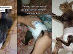 VIRAL Video Kucing Pakai Pampers, Pemilik Ungkap Alasan dan Penyebabnya
