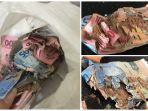 viral-cerita-netizen-yang-uang-tabungan-berjuta-jutanya-nya-dimakan-rayap-begini-nasibnya.jpg