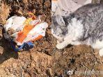 viral-kucing-dimasukkan-kantong-lalu-dikubur-hidup-hidup-saat-pemilik-diisolasi-karena-virus-corona.jpg