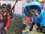 Viral Kucing Punya Hobi Olahraga Ekstrem, Sering Naik Gunung dan Bermain di Atas Ketinggian